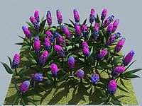 3ds max flower hyacinth