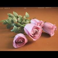 Roses on floor