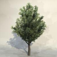 Tree_016.zip