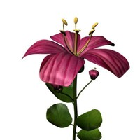 maya pink flower
