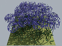 3d model of flower african lily