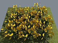 3d flower buttercup