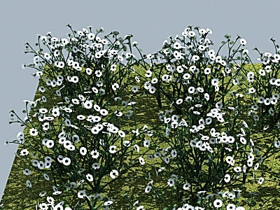 Flower_Daisy_MAX8_400_03.png