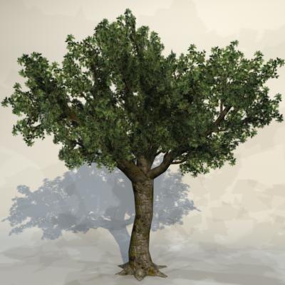 Tree_019_1.jpg