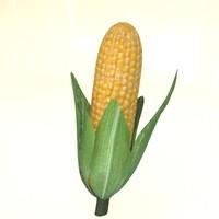 corn cob 3d model