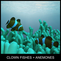 clown fishes and anemones
