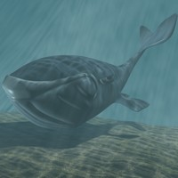 toon whale 3d model