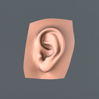 human realistic ear max