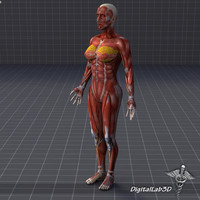 Human Female Muscular System