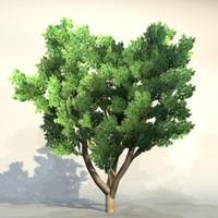 Tree_n_021.zip