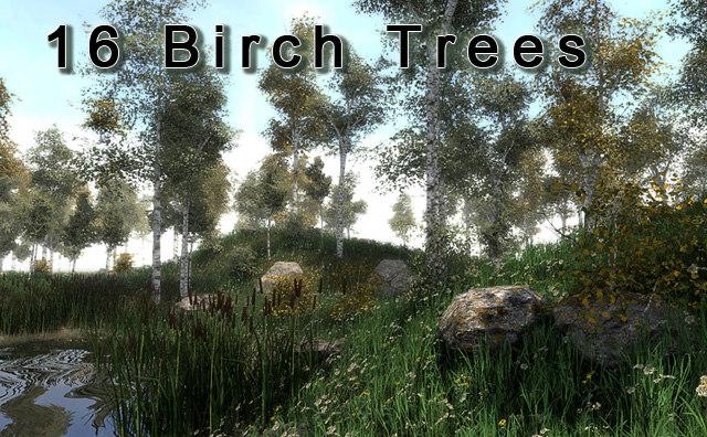 birch-tree-promo.jpg