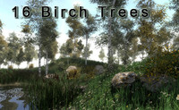 3d asset 16 birches trees