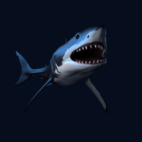 great white shark animation 3d obj
