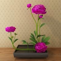 peony in flowerpot
