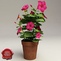 Dipladenia Bush Red Riding Hood