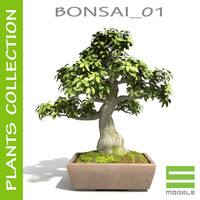 Tree - Bonsai_01