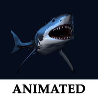 3d great white shark animation