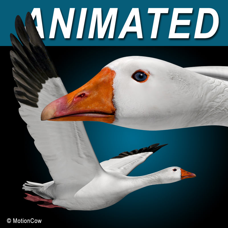 Goose_A.jpg