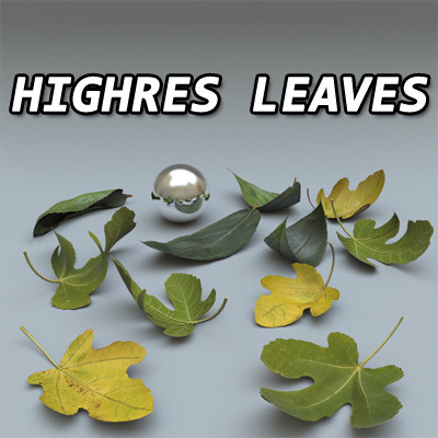 Highres Leaves.jpg