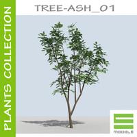 3d tree - ash 01 model