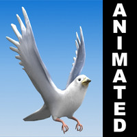 Pigeon animated