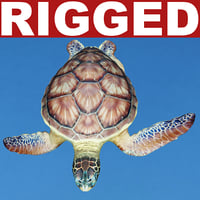 Sea Turtle Chelonia Mydas Rigged
