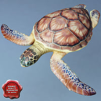 sea turtle chelonia mydas 3d model