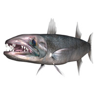3d barracuda fish ray-finned