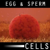 Ovum(Egg) and Sperm Animated Scene