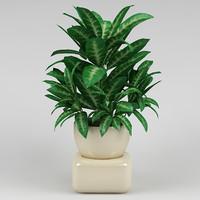 plant_24