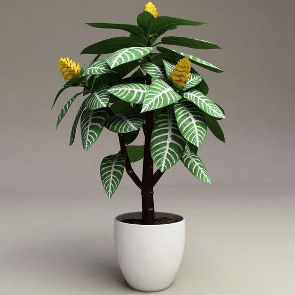 zebra plant aphelandra squarrosa 3d model