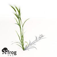 barley hordeum vulgare 3d model