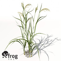XfrogPlants Rice