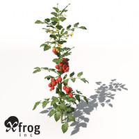 tomato plant 3d model