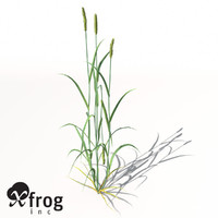 XfrogPlants Wheat