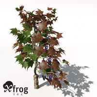 grape vine plant fruit 3d model