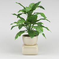 plant_25