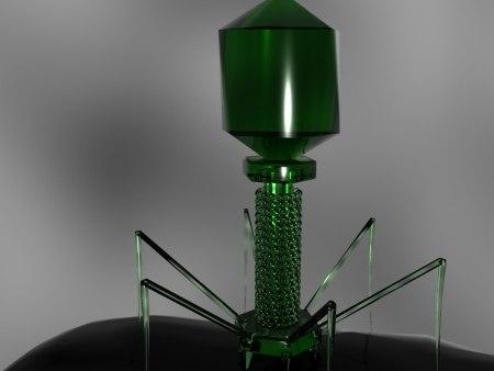 bacteriophage virus bacterium dna max