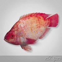 fish red snapper 3d model