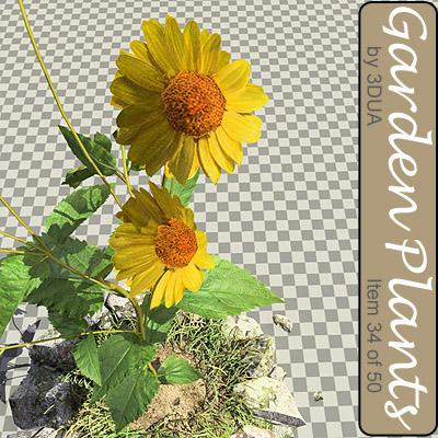 023_daisies01.jpg
