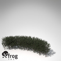 3d xfrogplants boxwood hedges plant model