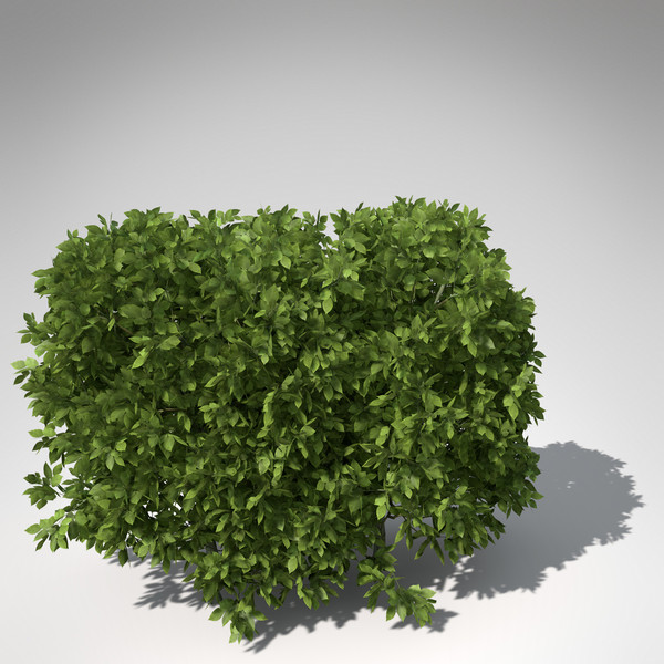 european hornbeam hedges 3d model - XfrogPlants European Hornbeam (hedges)... by xfrog