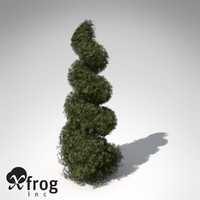 XfrogPlants False Cypress (bushes)