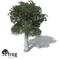 white kauri tree 3d model