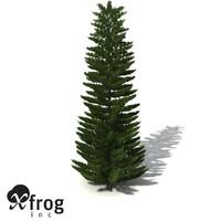 XfrogPlants Norfolk Island Pine