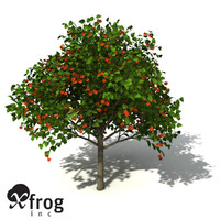 XfrogPlants Paper Mulberry
