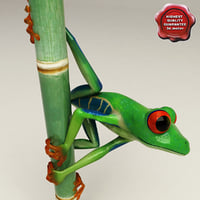 Red eyed tree frog Pose 1