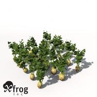 maya xfrogplants celery plant