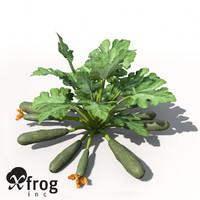 XfrogPlants Zucchini
