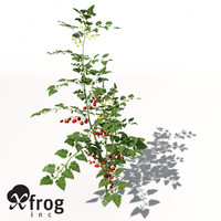 3d model xfrogplants cherry tomato plant